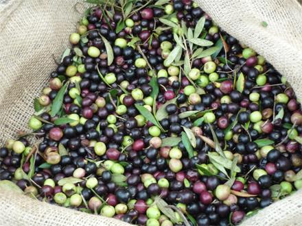 foto Orgànicfruit: l'oli ecològic ple de matisos i sensualitat - 4