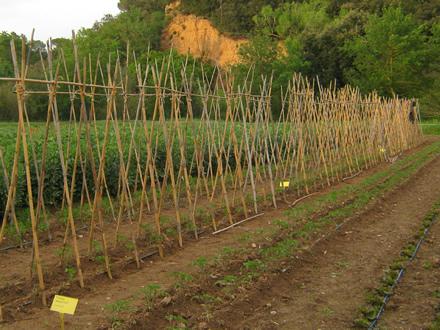 foto La Teulera: agroecologia d'arrel - 5