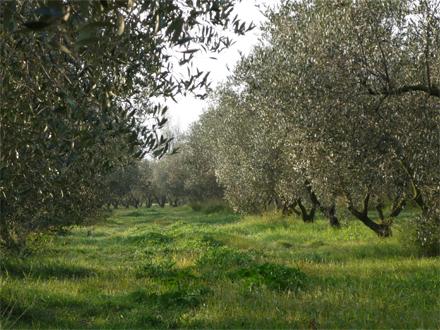 foto Orgànicfruit: l'oli ecològic ple de matisos i sensualitat - 5