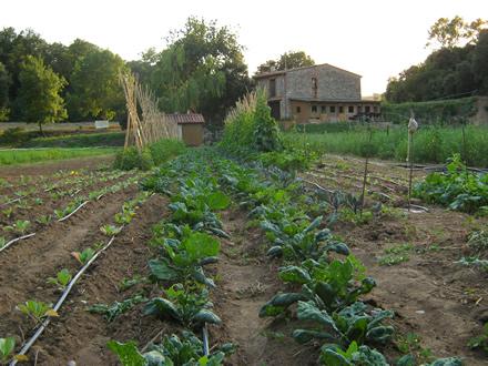 foto La Teulera: agroecologia d'arrel - 6