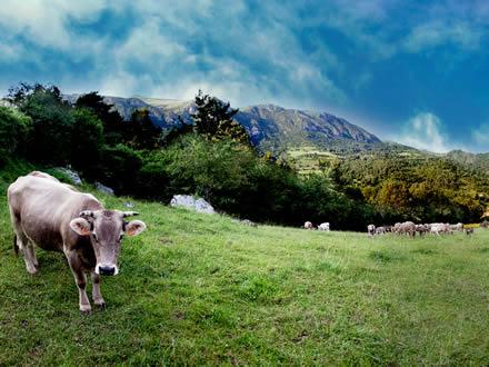 foto Pirinat: carn ecològica del Ripollès - 2