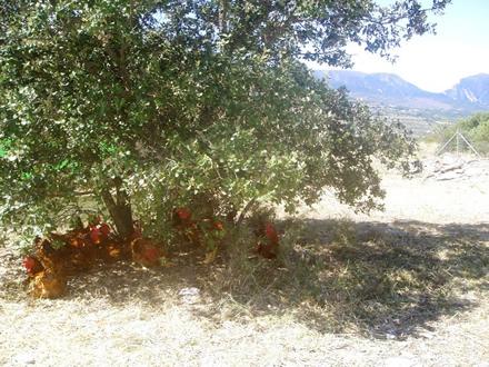 foto Torre d'Erbull: pollastres envoltats de natura - 5