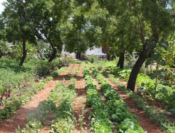 Agricultura de proximitat, sostenible i ecològica a Eivissa