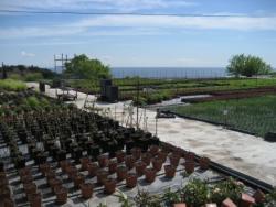 Bioplanta: plantes que alimenten i curen