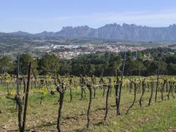 Castell d'Age, el compromís amb la vinya de tres generacions de dones