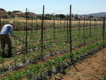 El camp al dia: dies llargs que ens alimenten