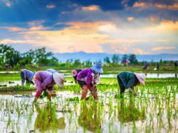 Agricultura i alimentació, nom de dona