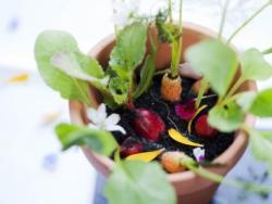 La verdura biodinàmica i els alls plantats en lluna plena