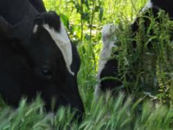 La Selvatana: iogurt ecològic ple de salut i missatge