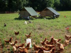 Planeses: regenerar la terra per viure millor