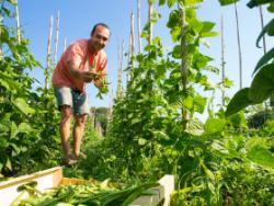 Horta la Fanecada: el vigor de les varietats locals recuperades