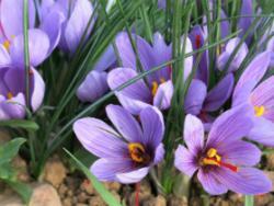 El camp al dia: la intensitat dels colors de la tardor