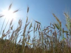 El camp al dia: l'estiu desperta la terra i l'omple de sol