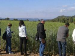 Blat forment: recuperant sabors i tradicions al Lluçanès
