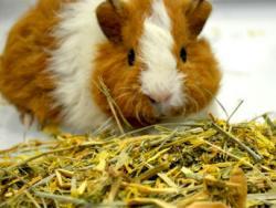 L'alimentació saludable de conills i rosegadors