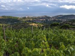 Celler Joaquim Batlle: vinyes ecològiques de marinada