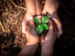 Què ens garanteix la certificació ecològica?