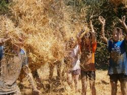 Busques colònies d'estiu saludables per als teus fills?