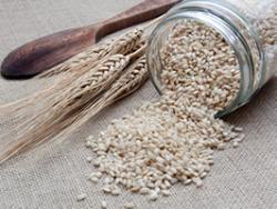 Les bondats del cereal bio