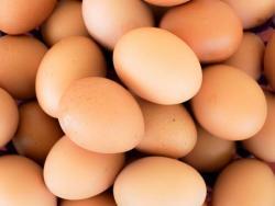 El soci pregunta: tota la veritat sobre l'ou