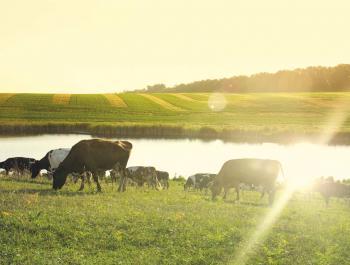 Carn de pastura, un pas més enllà