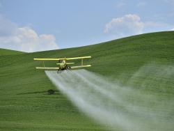 Els pesticides eliminen el 80% de les poblacions d'insectes a tot Europa