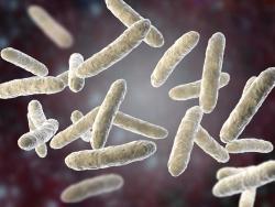 Les 10 coses que cal saber sobre els probiòtics