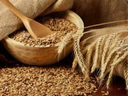 Per què hi ha tanta intolerància al blat?