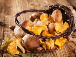"""LA GUIA """"ABC anticàncer"""": Les bases per començar a fer canvis en la teva alimentació"""