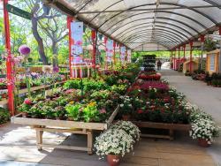 Garden Center Bordas, el paradís de l'horticultura i la jardineria ecològica