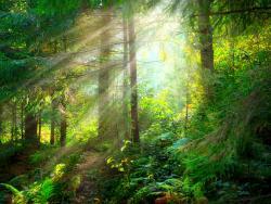 Guanya salut amb els banys de bosc