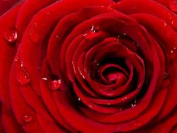 El cicle menstrual, un do de la natura