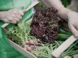 Un estudi més confirma que els aliments ecològics són més sans