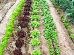 Què és la sobirania alimentària?