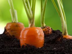 Dos anys de nou logotip europeu de producció ecològica