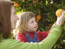 El teu fill no menja fruita? Desculpabilitza-te'n