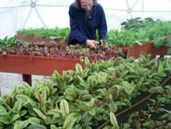 Tallers gratuïts d'horticultura urbana per a escoles i famílies
