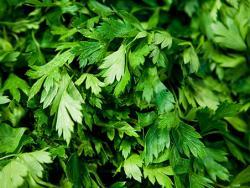 Fines herbes, herbes i espècies