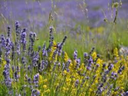 Aigües florals per revitalitzar la pell