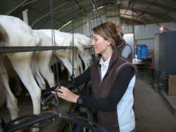 En quins casos es pot recomanar el consum de lactis de cabra i de búfala?