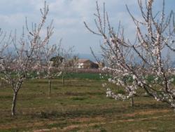 La Montoliva: diversificant el paisatge agrari
