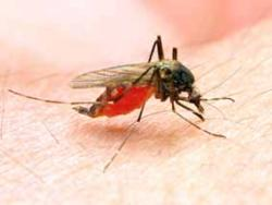 Conviure amb els nostres amics… mosquits!