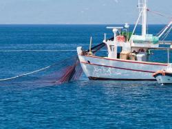 Per què el peix salvatge no es pot considerar ecològic?