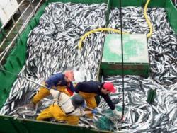 Espanya es menja tot el peix previst pel 2011