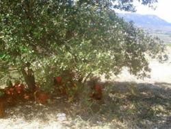 Torre d'Erbull: pollastres envoltats de natura