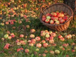 Estàs preparat per beneficiar-te dels efectes antioxidants d'una poma?