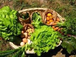 Aliments ecològics: la millor inversió per la teva salut