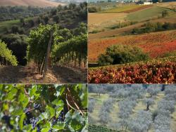 La Via del Sagrantino a Úmbria: la Itàlia biològica i desconeguda